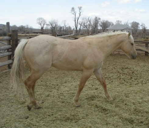 palomino horse color - photo #21