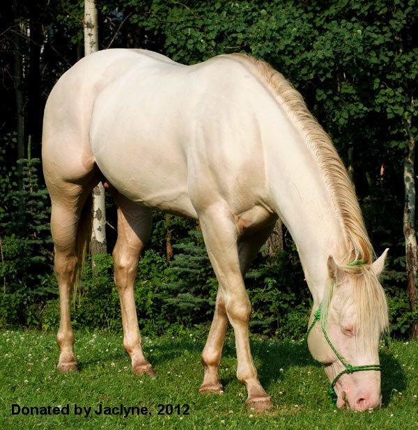 Cedar Ridge Quarter Horses