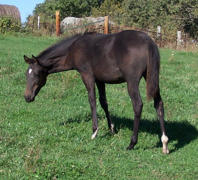 Horses for Sale in Ohio  FREE Ads  HorseWeb