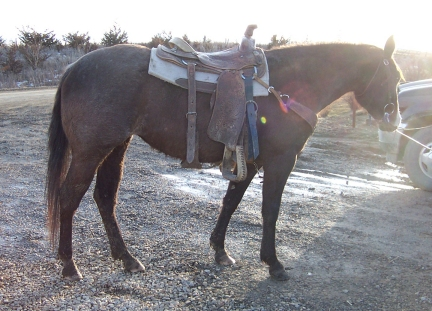blue roan cutting horse