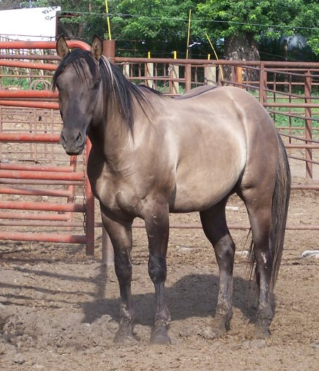 the quarter horse colts imagery contributes to theme Example: a foal measuring 15 ¼ inches translated to a mature horse  down, is  easily seen to be one-quarter of the horse's mature height.