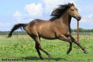 QUARTER HORSE COLORS: Colors defined with photos
