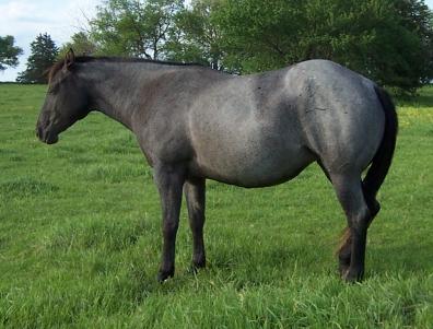 Roan Horse Breeds - Best Image Konpax 2017
